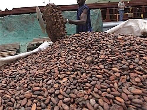 Le Cameroun a produit 269 495 tonnes de cacao au cours de la campagne 2015-2016