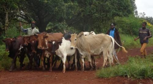 حوالي 195 مليون FCFA للجهات الفاعلة في مجال الزراعة في منطقة الكاميرون في أداماوا