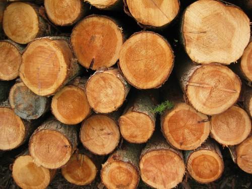 la justice n erlandaise condamne la soci t fibois bv pour exportation ill gale de bois au. Black Bedroom Furniture Sets. Home Design Ideas