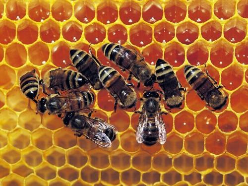 La production du miel chute de 70% dans l'Adamaoua, l'un des principaux bassins de production du Cameroun