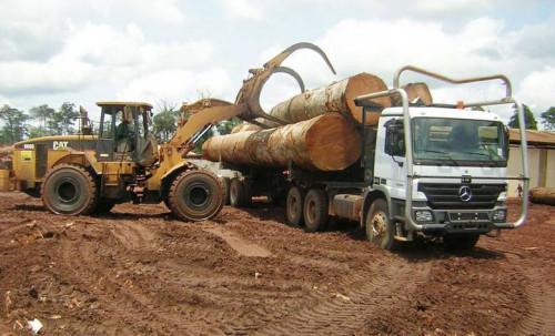 Камерун: 5% збільшення експорту пиломатеріалів до Європейського Союзу в тонах 2018, 253 400