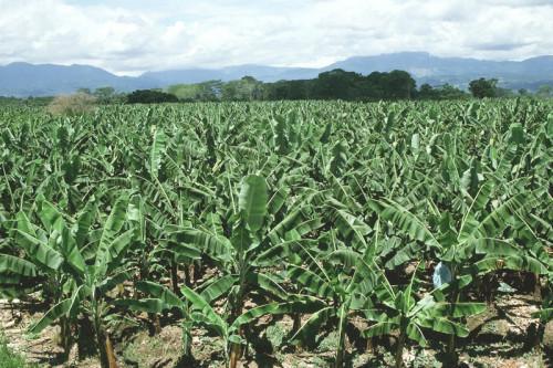 Офіційний запуск сільськогосподарської кампанії 2019 в Південному Камеруні