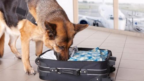 وسيستخدم الطيران المدني الكاميروني الكلاب التي تستنشق المتفجرات والمخدرات في المطارات