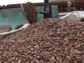 le-prix-bord-champ-du-cacao-camerounais-chute-a-nouveau-d-au-moins-125-fcfa-le-kilogramme-en-l-espace-d-une-semaine