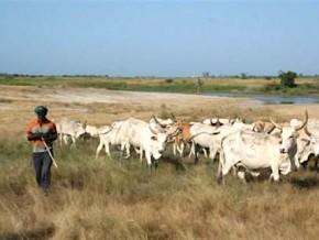 43-5-milliards-de-fcfa-de-la-bid-pour-le-developpement-integre-et-le-commerce-du-betail-dans-les-regions-septentrionales-du-cameroun