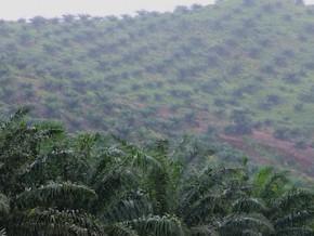 cameroun-l'investissement-et-le-développement-des-marchés-agricoles-à-l'épreuve-des-défis-fonciers
