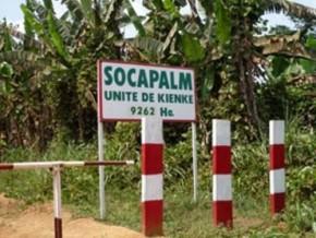 cameroun-pour-2016-la-socapalm-devrait-distribuer-6-8-milliards-de-fcfa-au-titre-de-dividende-a-ses-actionnaires