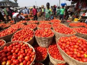la-forte-pluviometrie-et-les-exportations-rencherissent-la-tomate-sur-le-marche-camerounais