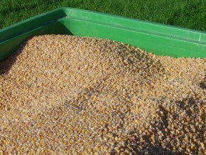 900-tonnes-de-semences-de-maïs-certifiés-à-produire-et-distribuer-aux-producteurs-camerounais-en-2015