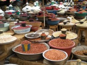le-risque-de-famine-plane-sur-la-region-de-l-extreme-nord-du-cameroun