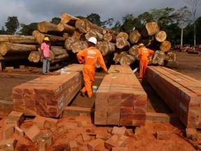 l'etat-camerounais-investi-15-milliard-fcfa-pour-fournir-des-équipements-de-2ème-et-3ème-transformation-du-bois-aux-opérateurs-privés