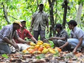 cameroun-coup-de-pouce-de-la-world-cocoa-foundation-au-programme-new-generation-du-cicc