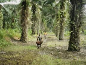 socfin-actionnaire-majoritaire-de-socapalm-modifie-sa-politique-zero-deforestation