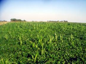 apres-l-echec-de-justin-sugar-mills-un-nouveau-projet-sucrier-est-en-gestation-dans-l-est-du-cameroun