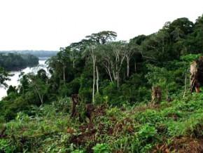 le-cameroun-dispose-de-413-000-ha-de-foret-du-domaine-permanent-amenage-au-mois-de-novembre-2016