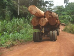 cameroun-un-rapport-de-l'ong-chatham-house-critique-la-gestion-de-la-filière-bois