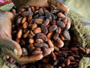 cameroun-entre-le-debut-et-la-fin-de-la-campagne-cacaoyere-2016-2017-le-kg-de-feves-a-connu-une-decote-de-500-fcfa