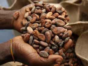 cameroun-l-americain-milost-global-finance-une-usine-de-transformation-de-cacao-de-32-000-tonnes-extensible-a-64-000-tonnes