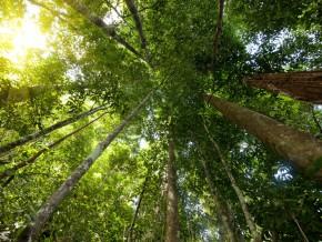 greenpeace-afrique-vulgarise-la-politique-haute-teneur-en-carbone-au-cameroun