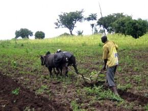 plus-de-190-millions-de-fcfa-de-financements-pour-les-acteurs-agricoles-de-la-partie-septentrionale-du-cameroun