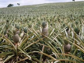 quinze-nouveaux-agropoles-de-production-seront-créés-sur-le-territoire-camerounais-en-2015