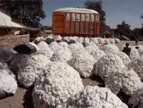 recherche-une-alliance-franco-camerounaise-pour-developper-la-filiere-coton
