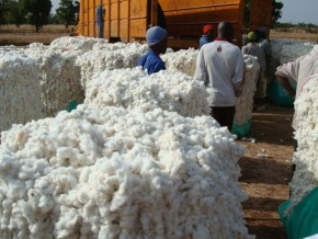 cameroun-l'ivoirien-filtisac-fournira-des-emballages-à-la-sodecoton-pour-plus-d'un-milliard-fcfa