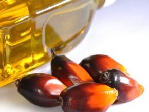 la-filière-huile-de-palme-au-cameroun-réalise-un-chiffre-d'affaires-annuel-de-190-milliards-de-fcfa