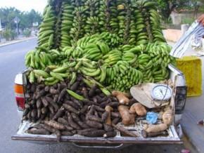 le-cameroun-perd-25-de-sa-production-agricole-après-les-récoltes-à-cause-du-manque-d'infrastructures-de-conservation