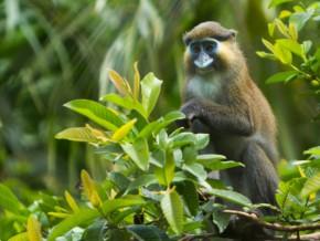 greenpeace-demande-au-gouvernement-camerounais-de-sauver-la-reserve-du-dja