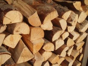 plus-de-26-000-hectares-de-bois-enlevés-sur-le-site-de-construction-du-barrage-de-mekin-au-sud-du-cameroun