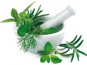 cameroun-vers-l-institution-des-2017-d-une-taxe-a-l-exportation-de-2-sur-les-plantes-medicinales