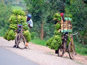 le-cameroun-veut-créer-un-fonds-de-facilitation-des-crédits-de-moyen-terme-aux-populations-rurales