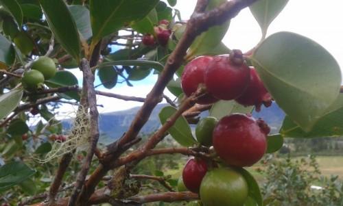 Cameroun: Fermencam veut planter 2000 hectares de fruits pour lancer la production des jus naturels