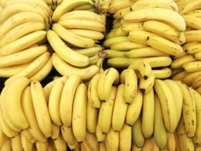 le-cameroun-a-exporte-152-384-tonnes-de-banane-a-fin-juillet-2016-en-baisse-de-5000-tonnes-par-rapport-a-2015