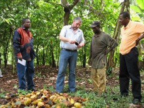 cameroun-telcar-cocoa-formera-10-000-nouveaux-producteurs-à-la-certification-du-cacao-en-2016