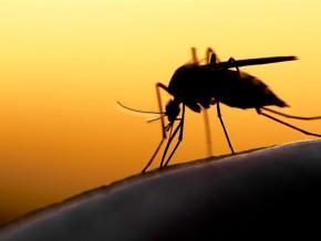 selon-andre-mama-fouda-la-mortalite-due-au-paludisme-au-cameroun-est-passee-de-30-a-12-4-entre-2012-et-2016
