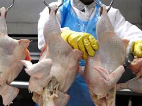 l-etat-camerounais-injectera-2-milliards-de-fcfa-dans-un-projet-prive-de-production-et-de-transformation-de-poulets