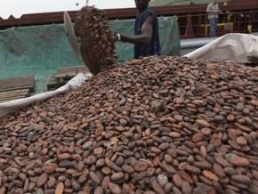 les-prix-bord-champ-du-cacao-camerounais-repartent-a-la-hausse-a-1500-fcfa-le-kilogramme