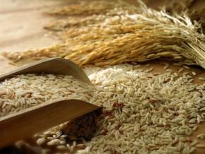 avec-une-production-de-300-tonnes-par-an-la-marque-camerounaise-logone-riz-tente-une-percee-sur-les-marches-local-et-tchadien