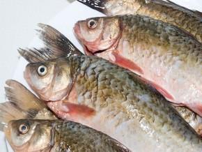 cameroun-500-tonnes-de-poissons-seront-produits-par-an-grâce-au-barrage-de-mékin
