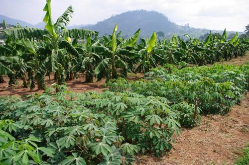 Le patronat camerounais cible 17600 hectares dans la région du Centre, pour des projets agricoles