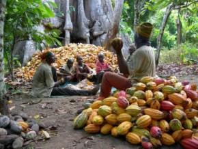 cameroun-22-400-tonnes-de-cacao-de-grade-1-achetees-lors-de-la-campagne-2016-2017-refoulees-a-l-exportation