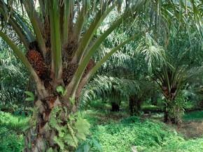 le-secteur-prive-camerounais-reclame-davantage-d-acces-a-la-propriete-fonciere-pour-les-agro-industries