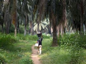 legere-baisse-du-resultat-net-de-la-societe-camerounaise-des-palmeraies-en-2015-a-5-8-milliards-de-fcfa