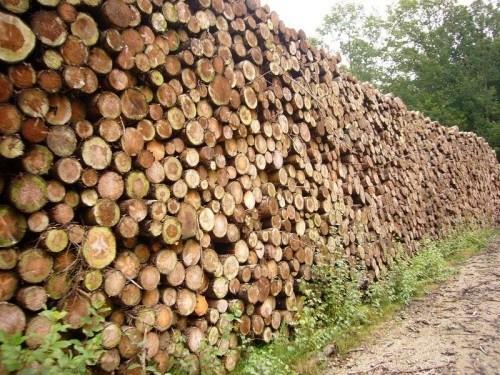 Les entreprises minières de l'Est Cameroun accusées d'exploiter illégalement les forêts