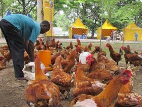 le-cameroun-investit-15-milliard-fcfa-pour-insérer-plus-de-1000-jeunes-dans-le-secteur-agro-pastoral