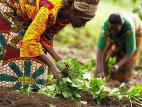 cameroun-126-millions-fcfa-pour-les-producteurs-agropastoraux-de-la-region-de-l-adamaoua