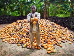 le-cameroun-a-exporté-44-085-tonnes-de-cacao-au-cours-des-3-premiers-mois-de-la-campagne-2014-2015