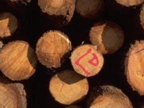 la-grande-bretagne-sanctionne-des-importateurs-de-bois-provenant-du-cameroun
